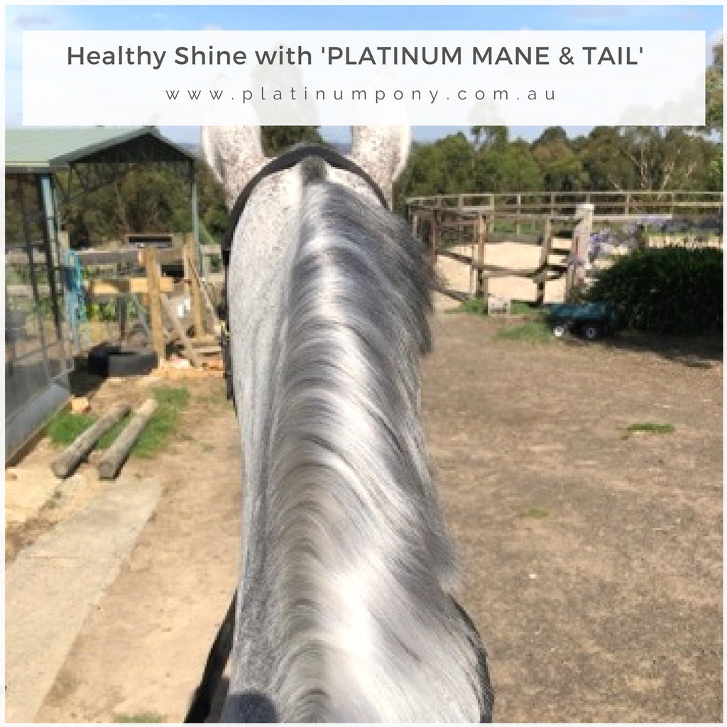 Platinum Mane & Tail - 250ml