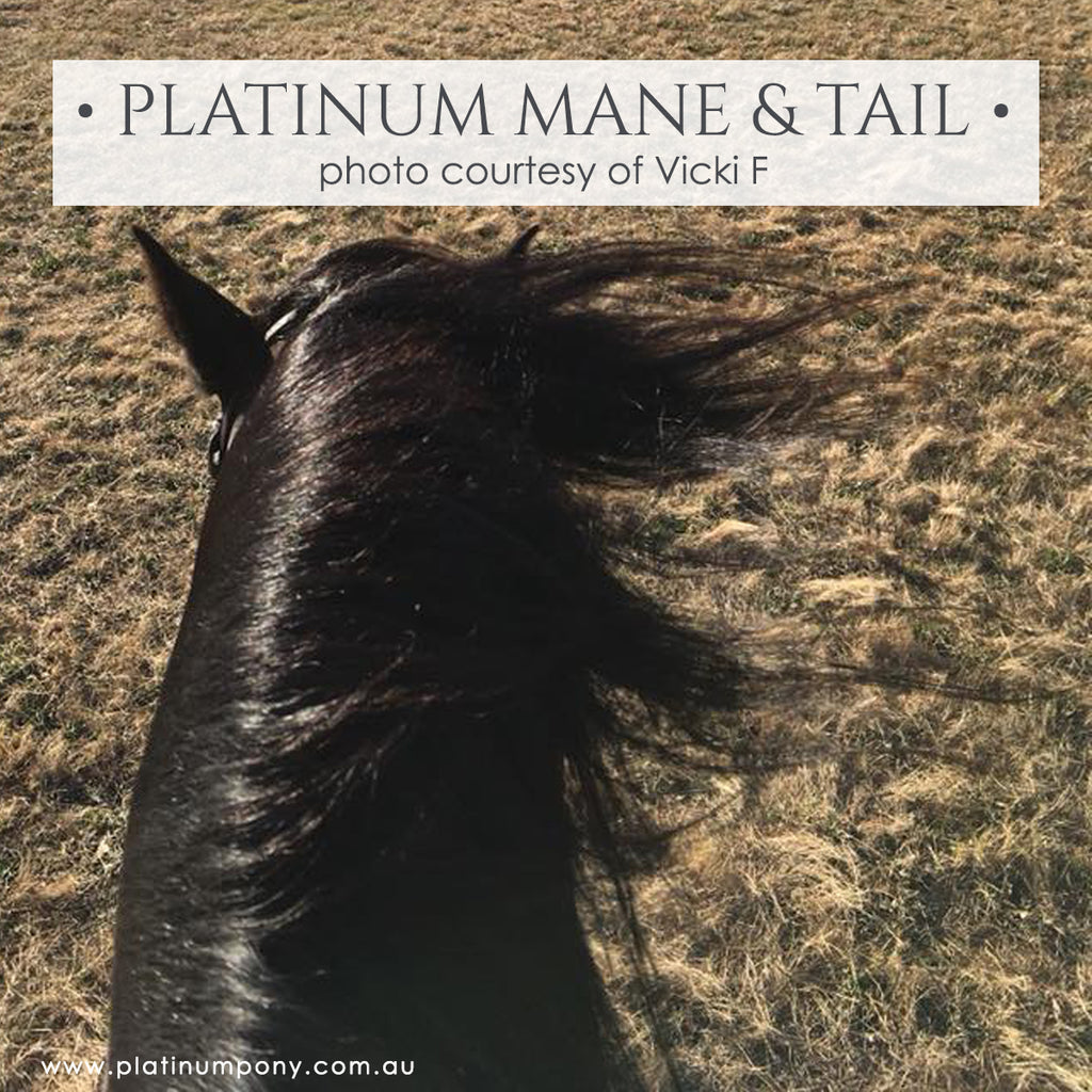 Platinum Mane & Tail - 2Lt plus Bonus