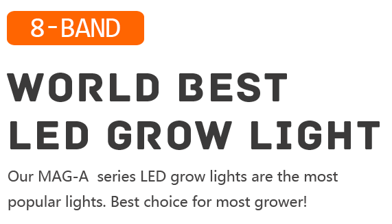 Growth Lamp