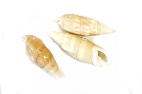 6 coquillages 5.5 x 2.5cm