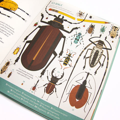 Bonkers About Beetles - Children's Hardback Book