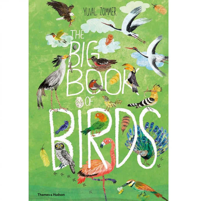 The Big Book Of Birds - Children's Picture Book