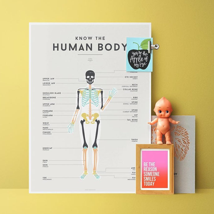 We Are Squared Educational Poster - Human Body