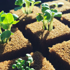 Superb Seedlings