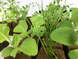 Extraordinary quality seedlings