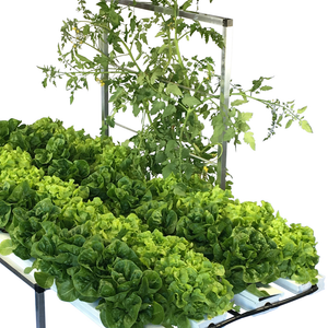 52 Plant Salad Table with Trellis