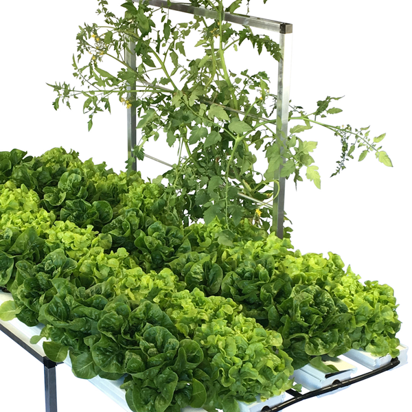 52 Plant Salad Table with Trellis - EXPO SPECIAL