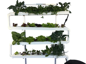 Grow your own produce in small areas