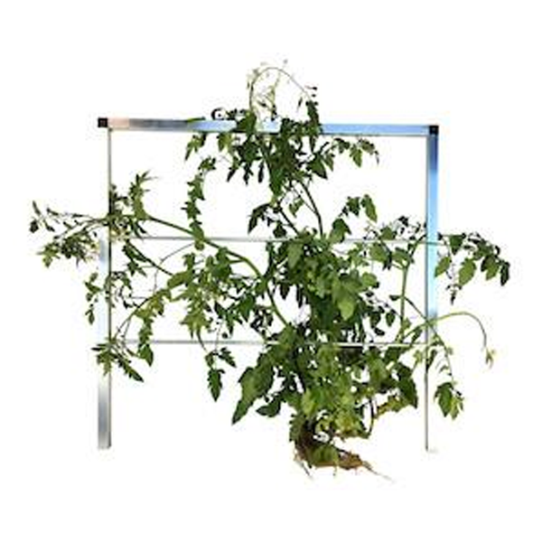 The Vine Salad Table - SALE $50OFF + $50 FREE Nutrient - ENDS SOON