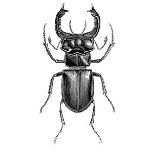 Stag Beetle Letter Press Card
