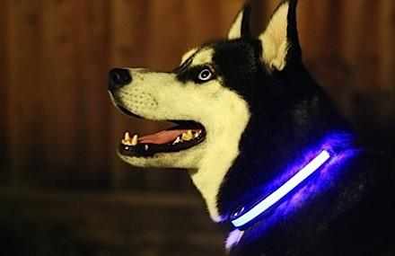 Light Up Dog Collar