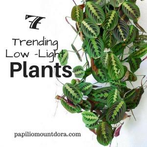 7 Trending Low-Light Plants