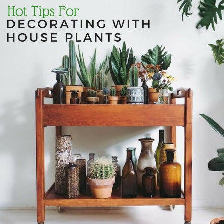 Hot Tips for Decorating with House Plants