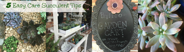 5 Easy Caring Tips for Succulents