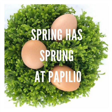 Spring Has Sprung at Papilio