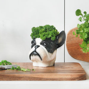 A Frenchie Planter or Pot