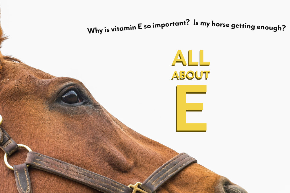 'E'ssential: Vitamin E for Horses