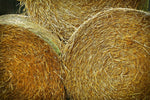 Ask the Expert: Is Coastal Hay Safe for My Horse?