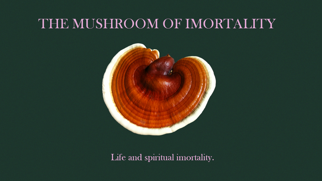 A comprehensive guide to Reishi Mushroom