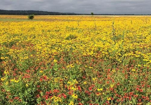 Regional Wildflower Mixes