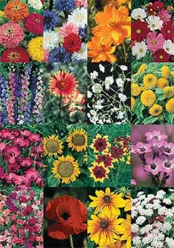Cut Flower Mix - 3350