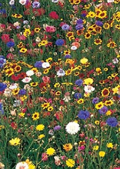 Northeastern Wildflower Mix