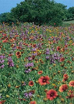North Central Wildflower Mix - 3335