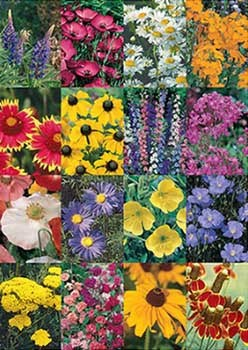 Rocky Mountain Wildflower Mix - 3337