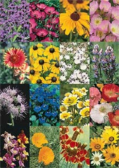 Southwestern Wildflower Mix - 3340