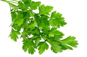 Italian Parsley - 3515