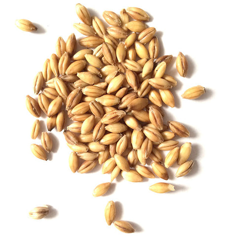 2 Row Brewers Malt - pilot-brewing-supply.myshopify.com