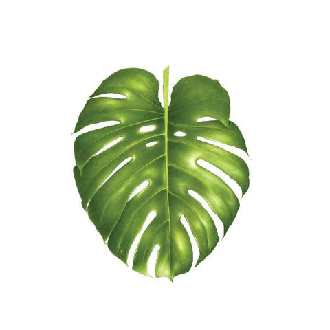 Philodendron Monstera Temporary Tattoo