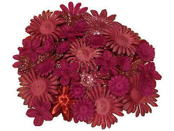 100pcs. Burgundy Flower Petals-DIY Hair Bows, Flowers for Weddings, etc. - Sparkle For Less