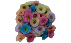 3pcs. Mix Natural Daisy Flower Hair Clips-2