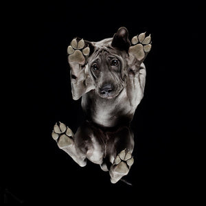 Under-Dogs Thai Ridgeback Print 20x20 cm