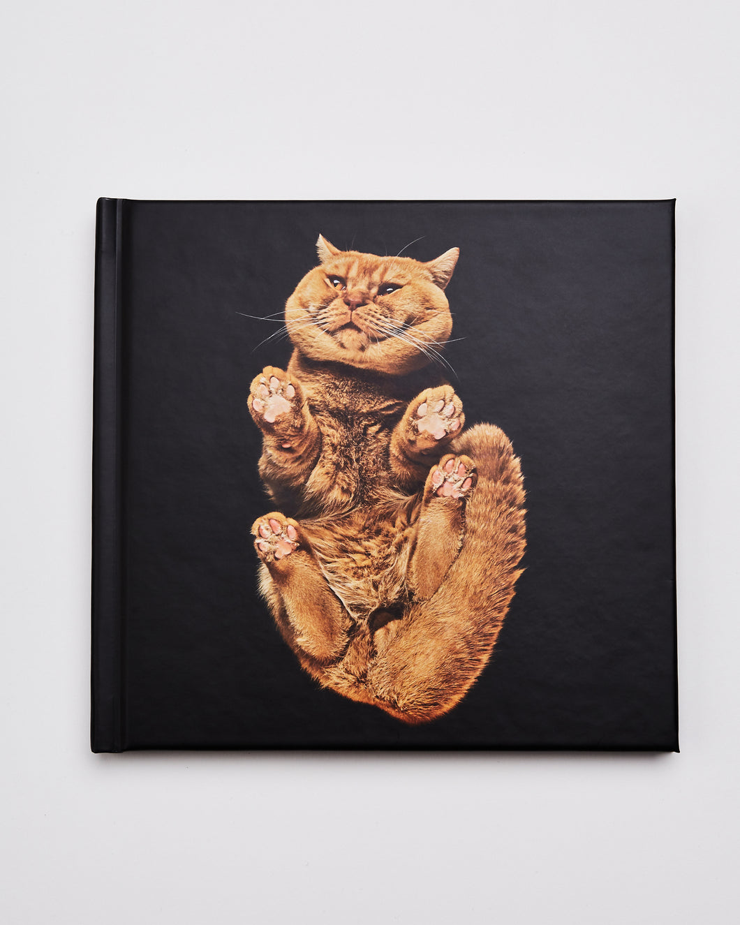 Underlook Notebooks Photography Pets Cats Andrius Burba
