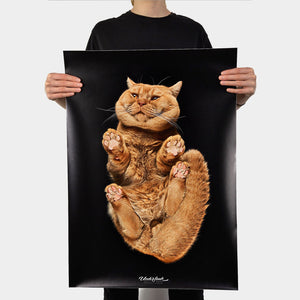 "Poster ""British Shorthair Ginger"""