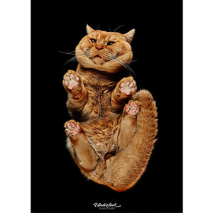"Prints or Canvas ""British Shorthair Ginger"""