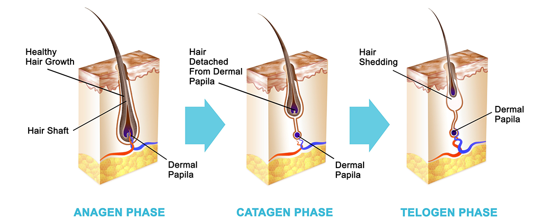 How Hair Grows: The Phases of the Hair Growth Cycle