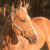 The HYBRIDHalter®: The Horse Training Halter That Revolutionizes Horse Halters
