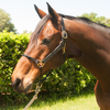 Hybrid Halter® Granted Official Patent – Gives Greater Control Than Any Halter