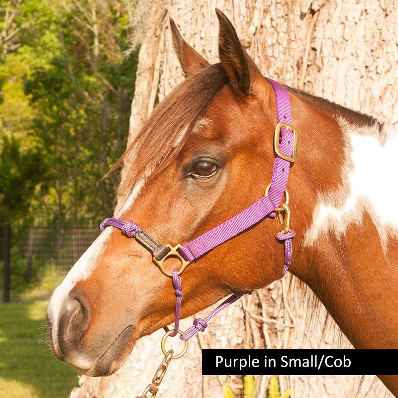 What size horse halter do I choose for my Arabian?