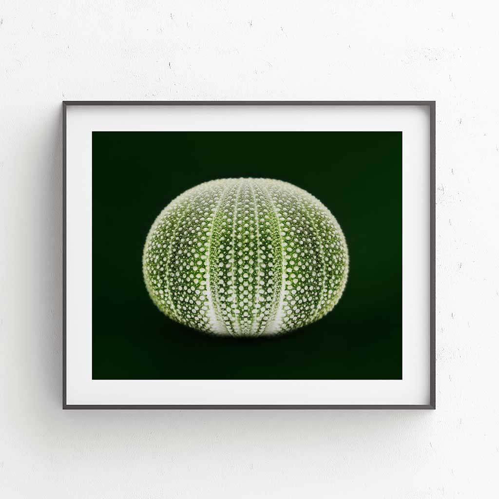 Desert Sea Fruit Fine Art Print - Luxurious Walls
