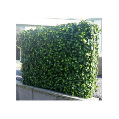 ResiGrass ResiLeaf Laurus Artificial Green Hedge