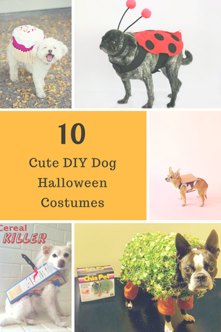 10 Super Cute DIY Halloween Costumes for Your Dog