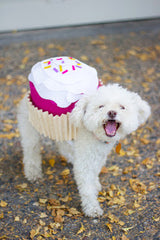 Tiny white dog wearing a cupcake Halloween costume