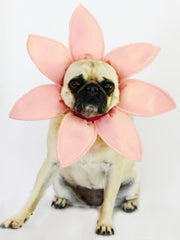 Pug wearing flower Halloween costume