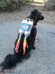 Black dog wearing rocket Halloween costume