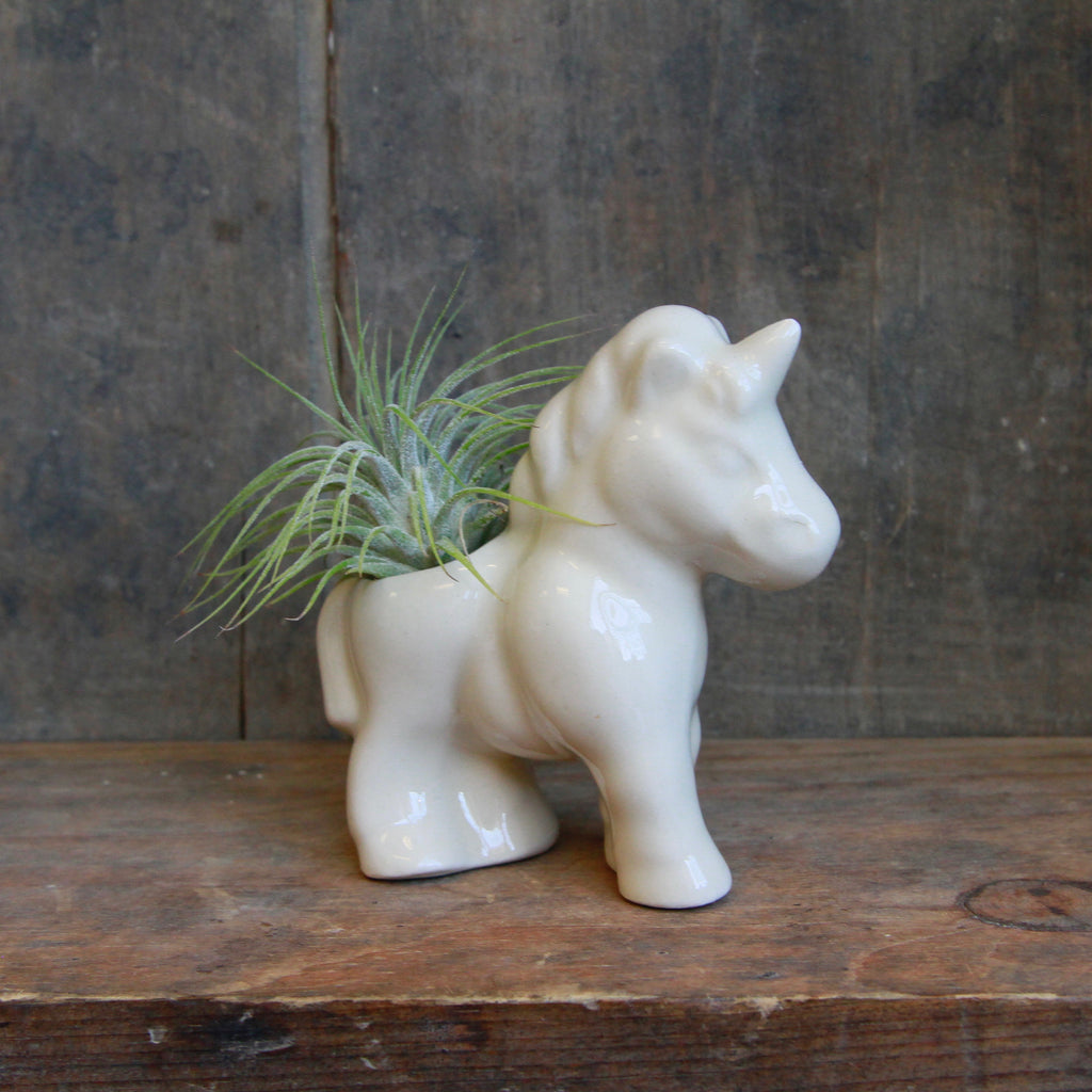 Claylicious - Ceramic Animal Air Plant Holder