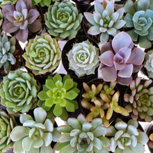 The Willie Wags Workshop: April 11th Succulent Plant & Sip